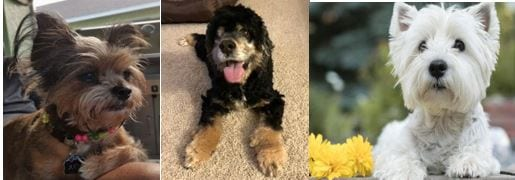 21 July Pets of the Week 2